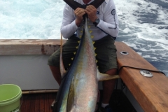 FISHING-MIKE-big-Tuna-
